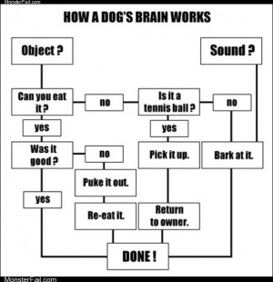 How dogs brains work