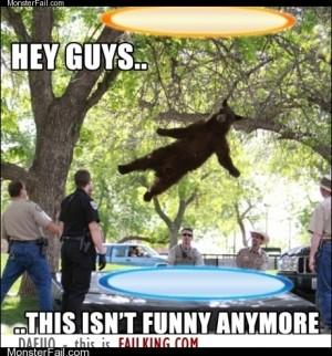 Portal Bear