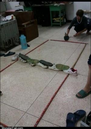 Monster fail photos  Floor Tennis