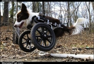 White trash repairs  The Doggie Wheelie Deluxe