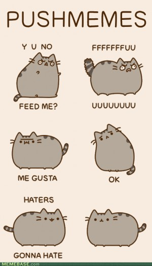 Internet memes Y U So Cute