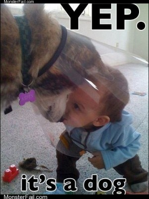 Identifying Dog