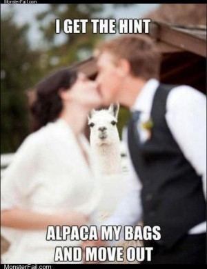 Monster fail photos  Alpaca Knows When Hes Not Wanted