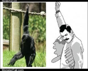Freddie Monkey