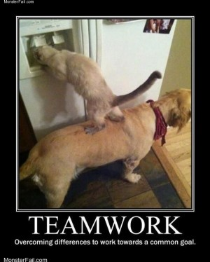Overcoming differences by teamwork