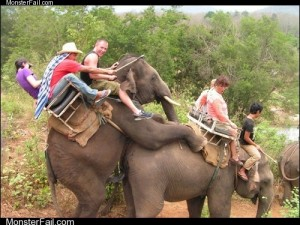 Monster fail photos  You Cant Stop Elephant Sexytime