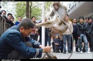 Monkey Karate Kick