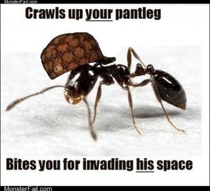 Scumbag Ant
