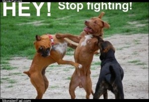 Hey stop fighting