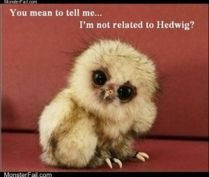 Skeptical Owlet
