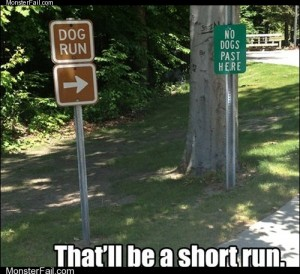 For the Lazy Dogwalkers