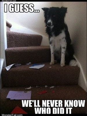 Unsolved Mysteries Dog Edition