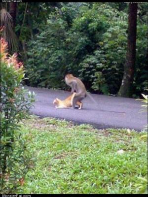Go monkey go