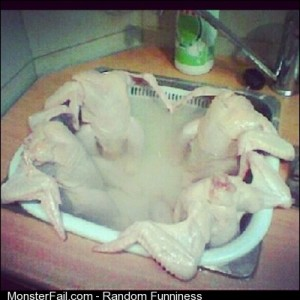 Headless chickens chillaxing in jacuzzi together before deathrow deathwish funnypics notmine