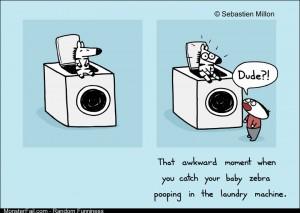 Laundry Poop