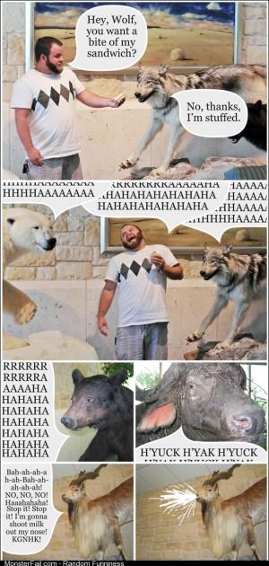 Hey, Wolf!