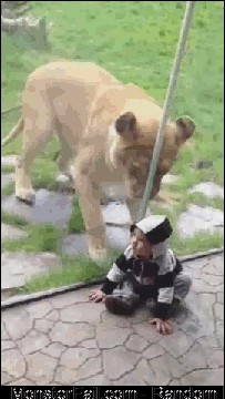 Is it wrong to feel bad for the lion?