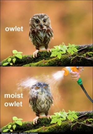 Moist Towlette