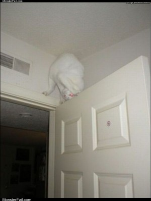 Ultimate ninja cat