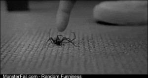 What my wife thinks will happen if she tries to kill the spider herself