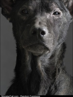 Clint Eastwood as a Dog