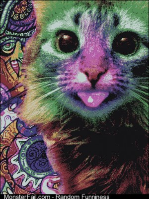 Trippy kitty