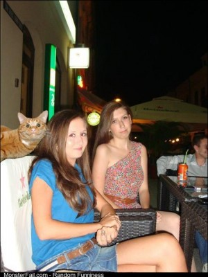 Photobomb level cat saw this on my news feed