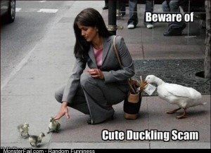 Beware of ducks stopping you at green lights