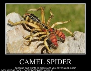 Demotivational  Motivational Camel Spider