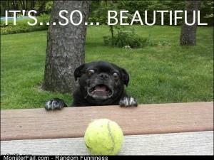Funny Pics Pug Is Impressed