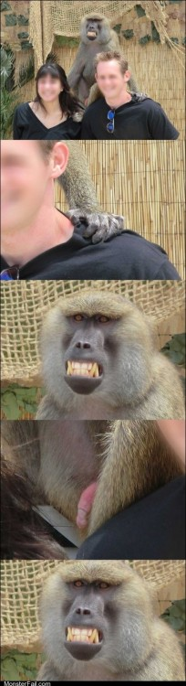 Photobomb that guy This Is Photobomb IR Baboon