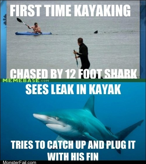 Misunderstood Shark is Misunderstood
