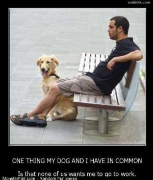 Funny Pics Dogs Common