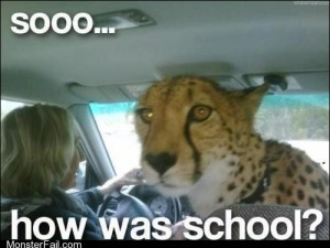 Did You Cheetah on Your Test