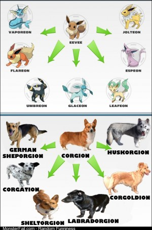 Corgis The Pokemon of the Dog World
