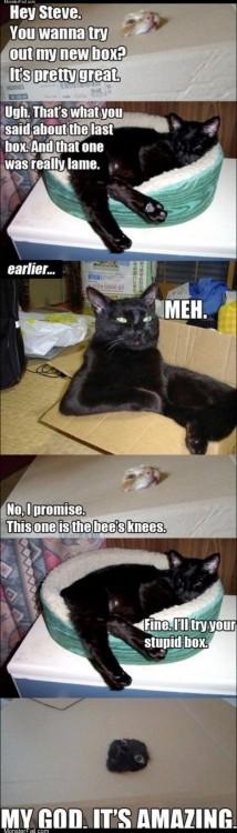 The cat box