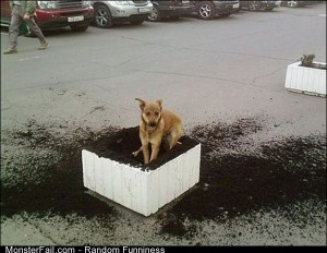 Funny Pics Destructive Dogs