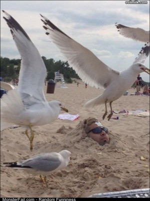 Funny Pics Buried In The Sand