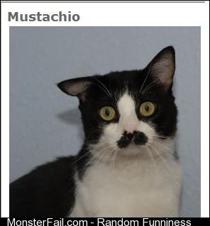 My friend was looking online for a cat to adopt and found this guy