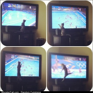 My friends cat watching Olympic Water Polo