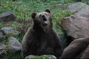 Went to the zoo and saw this bear yawn