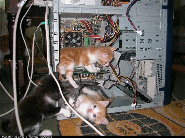 Cats love technology