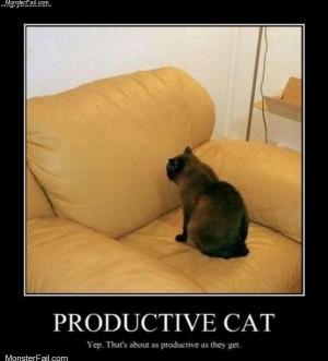 Productive cat