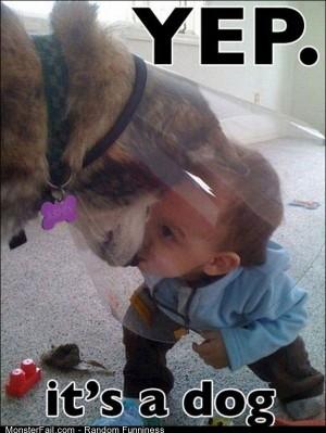 Funny Pics Yep