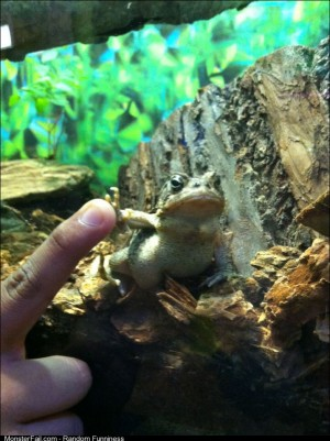 Gangsta frog doesnt give a fuck but still highfived me anyway