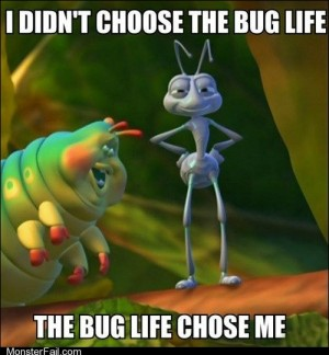 The Bug Life