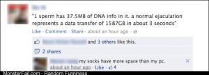 1 sperm has 37
