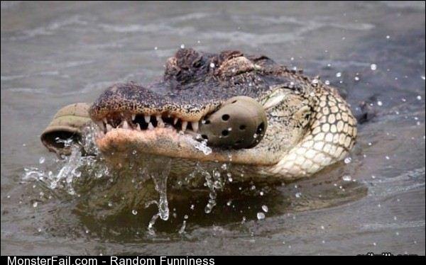 Funny Pics Croc On Crocs