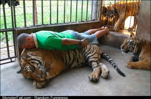 Planking Tiger Style