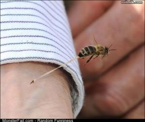 Funny Pics Honeybee Stinger